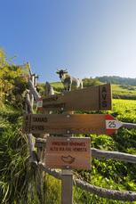 Der Vinschgauer Höhenweg führt an saftig grünen Almen vorbei