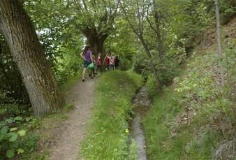 In den Tälern sorgen Waldpassagen für schattige Abschnitte