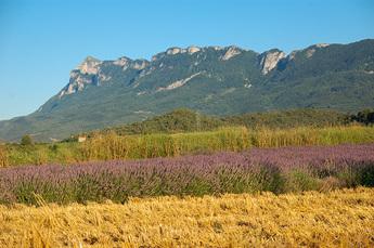 Wanderung zum Fusse des Couspeau-Massiv: Und wieder Lavendel!