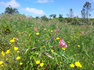 Im Frühling erwartet Sie ein wahres Blumenmeer im Hinterland der Algarve