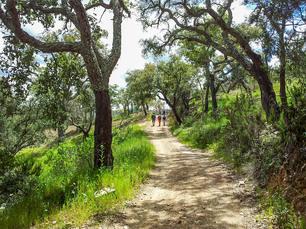 Die Wanderungen im Hinterland führen immer wieder durch schöne Waldabschnitte