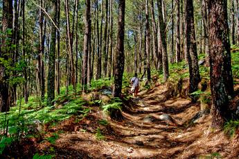 Rund um Monchique erwarten Sie dichte Wälder