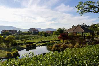 Auf dem Jakobsweg von O Porriño nach Cesantes geht es durch das Weinbaugebiet Rias Baixas