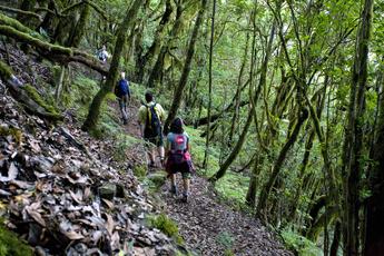 Magisch: Der moosbewachsene Lorbeerwald im Garajonay-Nationalpark (2. Wanderung)