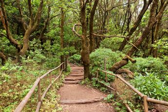 Auf der 5. Etappe geht es wieder in den Garajonay-Nationalpark. Und das auf gut gepflegten Wanderwegen...