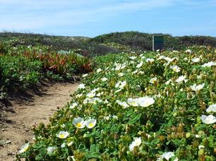 Markierungsstein im Blumenmeer: Unglaublich welche Blütenpracht der karge Boden hergibt!