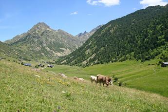 So idyllisch kann Andorra sein! Grüne Almen und grasende Kühe im Siscaró-Tal (2. Tag)