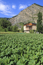 Tabakplantagen sind typisch für das traditionelle Andorra. In der enormen Höhe können nur wenige Kulturpflanzen angebaut werden…