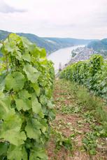 Und so sieht Oberwesel mit Blick über die Weinberge von oben aus.