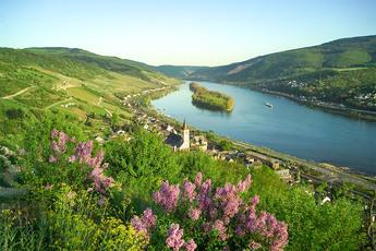 Und so schön präsentiert sich Lorch vom Rheinsteig aus betrachtet