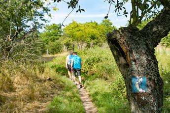 Immer der Rheinsteig-Markierung folgend, geht es zunächst durch die Parklandschaften des Siebengebirges.