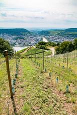 Hinter Rüdesheim wandern Sie durch die lieblichen Weinberge des Rheingaus. Natürlich gibt es reichlich Gelegenheiten den Riesling auch zu probieren!