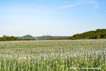 Auf dem Rennsteig wandern Sie im Wechsel entlang von Getreidefeldern...