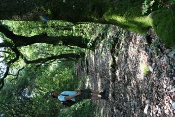 Wegmakierungen finden sich auch an den Bäumen