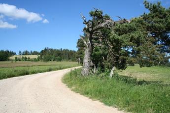 Wanderweg zwischen Aumont Aubrac und Nasbinales