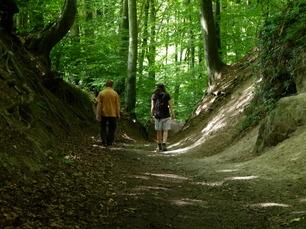 Wander auf dem Rheinsteig