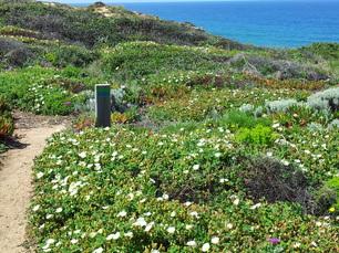Im April blüht die Flora und Fauna