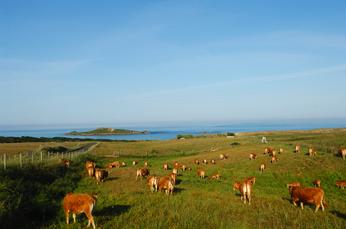 Extensive Landwirtschaft ist typisch für die Vicentina-Küste. Ist ja auch ein Naturpark!