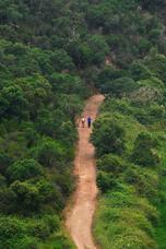 ... und so sehen die Wanderwege im grünen Hinterland des Alentejo aus